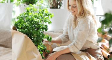 J'aime mes plantes: Premier site de plant-sitting