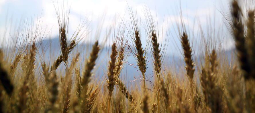Exploitation agricole à responsabilité limitée (EARL)